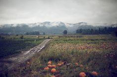 oregon pumpkin patch