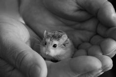 17 - bebes-animaux-trop-craquants-labananequiparle
