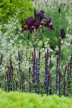 Centenary Garden   Chelsea Flower Show. Iris, buxbom salvia och kan det vara nån ljusblå veronika kanske? Fin kombination