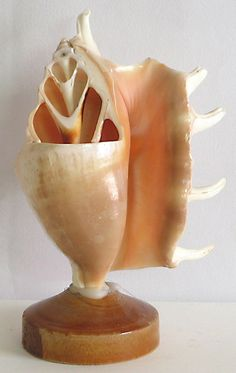 Pen and Pencil Holder (Shell))