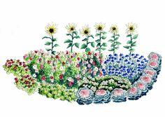 Loihdi puutarhaasi kukkaloisto itse kasvatetuilla kesäkukilla. Katso suunnitelma edulllisen kylvökukkapenkin tekoon Viherpihasta.
