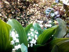 Mughetto #fiori #profumo #primavera #flowers #campanelli