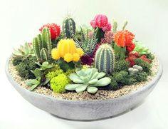 Bildergebnis für Kaktusvorbereitungen tacos and tequila Succulent Arrangements, Planting Succulents, Planting Flowers, Air Plants, Garden Plants, Artificial Grass Rug, Mini Cactus Garden, Tacos And Tequila, Container Gardening