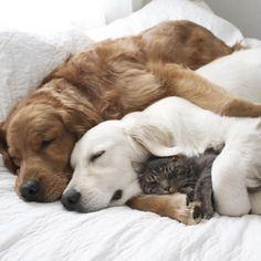 犬のカップルは猫が大好き♡ 3匹の微笑ましい姿に心が和む (*´ェ`*) 22秒 | エウレカ!eureka! - もふもふ犬猫動画