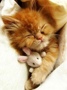 Super cute kitten cuddling up to Lamby!