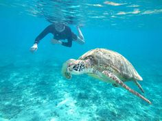 snorkel with sea turtle, Playa Del Carmen