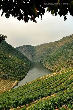 Douro Douro Portugal, Portugal Travel, Valley Landscape, Wine Vineyards, Douro Valley, Port Wine, Day Tours, Wine Country, Portuguese