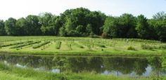 Go to Happy Valley Farm for u-pick blueberries and other fruit