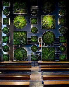 Moss and lichen vertical garden, room divider, and artistic presentation