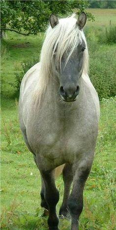 Pretty Silver Grulla horse