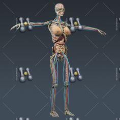 Women human anatomy pictures Human Anatomy Female, Human Anatomy Picture, Pictures, Women, Photos, Grimm, Woman