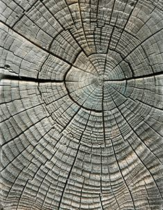 Photo about Weathered wood grain in concentric circles. Image of crack, texture, deforestation - 5314842 Wood Patterns, Patterns In Nature, Textures Patterns, Teen Wall Decor, Fractals In Nature, Theme Nature, Easy Canvas Art, Wood Circles, Concrete Art