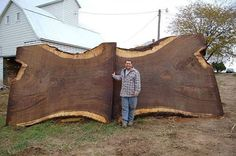 Check out this massive slab! Here's to hoping that the tree was rotten before being cut. What would you be creating with this?
