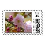 Pretty cherry blossom flower postal stamps