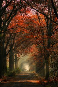 Beautiful Autumn Pathway
