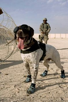 "I feel a little silly putting a dog soldier in a ""cute animals"" board, but...look at that happy face!"
