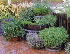 Barrel herb garden