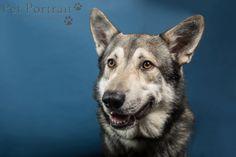 Hondenfotograaf Amsterdam - PetPlan Winner actie - Honden op de Winnershow-27
