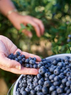 Fruit Trees and Shrubs - good ideas for edible landscaping