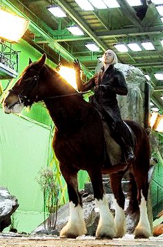 The horse Lee rode in The Hobbit, Moose (the one they CGI'd into his elk), WAS 18 HANDS HIGH. For those of you who don't speak horse, that means his horse was 6ft tall to his withers which is the highest point between his shoulders. He actually makes Lee look smol, how is this possible??