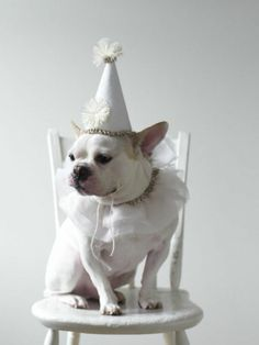 Do you dress your dog up for his/her birthday? #BIONIC www.bionicplay.com