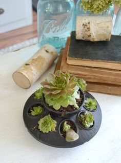 If you love succulents and want to find a unique way to display them, click over to find the easiest DIY planters to house all your succulents! Trough Planters, Indoor Planters, Diy Planters, Black Planters, Planter Ideas, Colorful Succulents, Succulents Diy, Planting Succulents, Succulent Planter Diy