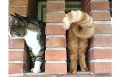 39 Perfectly Timed Photos Of Cats That You Won't Believe Are Real (Slide #20) - Pawsome