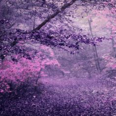 DeviantArt is the world's largest online social community for artists and art enthusiasts, allowing people to connect through the creation and sharing of art. Rainbow Aesthetic, Autumn Aesthetic, Flower Aesthetic, Purple Aesthetic, Aesthetic Photo, Aesthetic Pictures, Fantasy Forest, Autumn Forest, Lilac Flowers