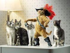 ¿Vas a cuidar el gato de tu amigo?