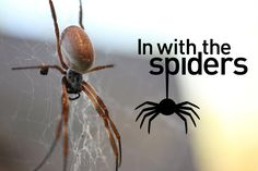 ZSL London Zoo has launched a new walk-through exhibit for one of the world's most feared, misunderstood and maligned creatures - the spider! Come and walk a...