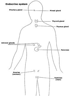 The glands and the endocrine system.