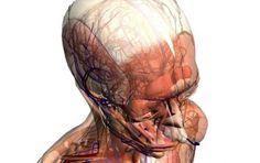 Curiosità sul corpo umano: quanto ne sai? [QUIZ] - Quanto ne sai sulle curiosità del corpo umano? Prova a svolgere il quiz che ti proponiamo e a verificare il tuo livello di preparazione.