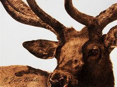 """Five Oclock Shadow (bull elk with velvet) by julie bender Pyrography ~ 11"""" x 14.5"""""""