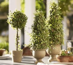"Faux Potted Baby Tears Topiary :: $29.50 (FREE shipping) | potterybarn.com :: [Ball: 6""dia x 16""h] Made of plastic, styrofoam, moss, wire & twig. ""Carefully handmade to look remarkable realistic..."" :: Great looking topiary at a great price (especially w/ free shipping & after a 15% off coupon!) 