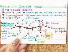 BIOLOGIA - RESPIRAÇÃO CELULAR  - Parte 3 Mind Maps, Study Biology, Mental Map, Photosynthesis, English Study, Study Inspiration, Studyblr, School Hacks, Student Life
