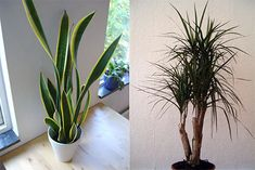 the-best-7-indoor-plants-that-purify-the-air