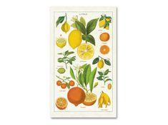 Braun Design, Office Supplies, Fruit, Lovely Things, Quotes, Vibrant Colors, Linen Fabric, Packaging, Tips