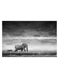 Gilt Exclusive - Elephant (Canvas) by Parvez Taj at Gilt