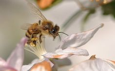 Virtual Bees Unravel Causes of Colony Decline - Nature - Global Technology Review Inspirations
