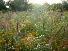 tom-stuart-smith-meadow-wildflowers-6-gardenista