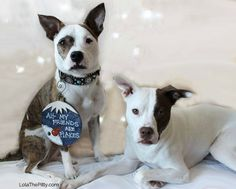 Christmas Is Going To The Dogs | http://www.thelazypitbull.com/2014/12/christmas-going-dogs/