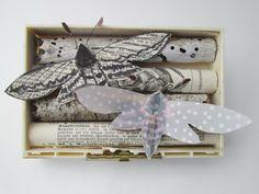 ⌼ Artistic Assemblages ⌼ Mixed Media & Collage Art - mano kellner, art box nr 365, kampferfalter