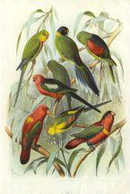 Multi Parrots (Light Green Leaves)