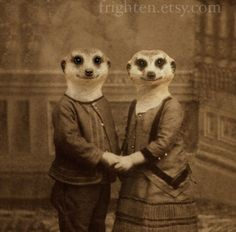 Meerkat Art Print The Meerkats 5x7 Sepia Altered by frighten, $15.00