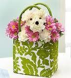Puppy flower arrangement.