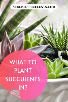 Wondering what to plant succulents in? If you've just recently discovered your passion for succulents, you may be wondering what to plant your succulents in. There are pros and cons to every type of container, but after reading this article you'll have enough knowledge to make an informed decision on what type of container is right for your plants. #succulent #succulentplant #succulentgarden Flowering Succulents, Colorful Succulents, Growing Succulents, Succulents In Containers, Planting Succulents, Cactus Plants, Indoor Succulents, Succulent Species, Succulent Soil