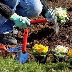 Para conhecer melhor sobre o mundo da jardinagem é importante saber o significado dos termos técnicos, nesta postagem os de letras R e ...