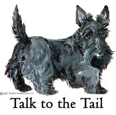 Scottish Terrier Tail