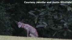 The RidicuList: Was a chupacabra spotted in Mississippi?