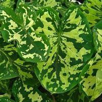 RCOP Ornamental Plants